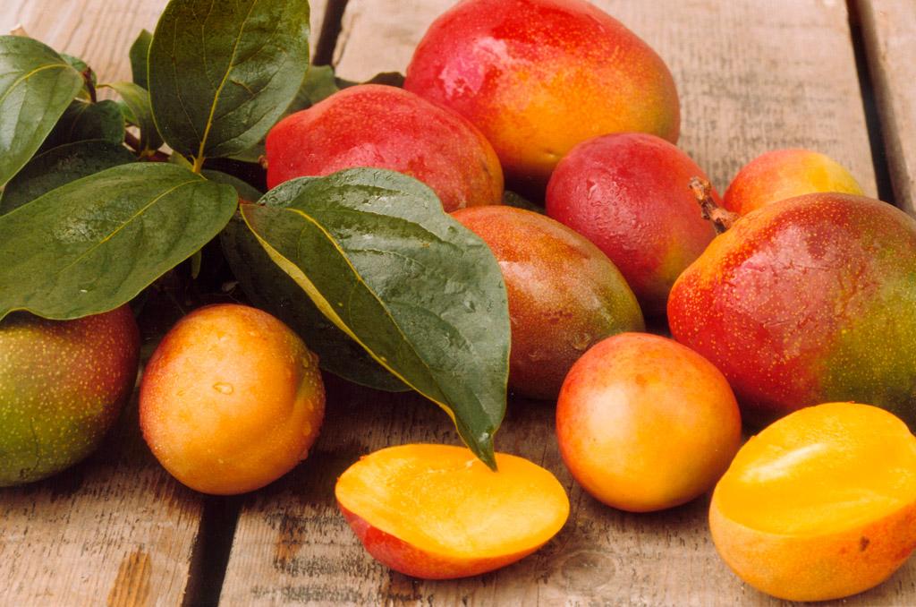 Mangos bergen eine reiche Vielfalt