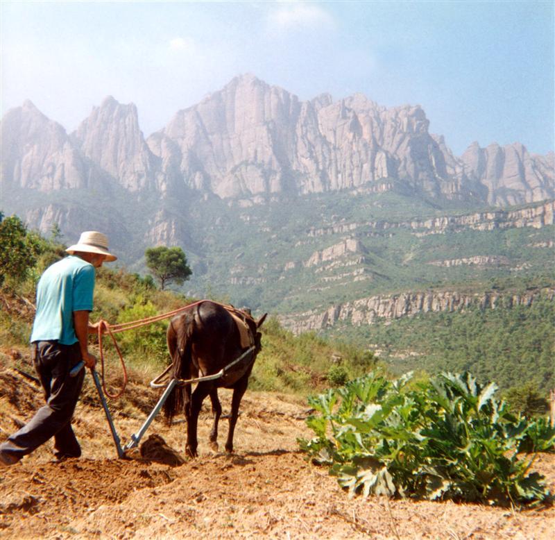 Bio Saatgut Bauer Spanien