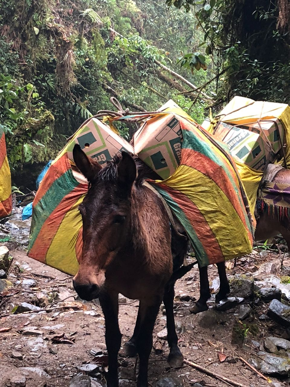 Esel in Peru